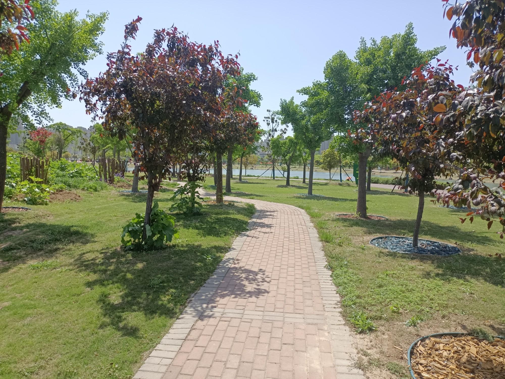 鹿鸣湖的小道